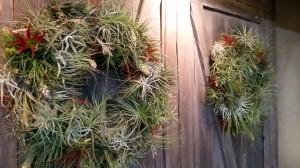 Bromeliad Wreaths