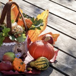 autumn basket with gourds and pumpkins